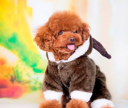 Christmas Elk Pet dog cosplay clothes for Poodle Bichon